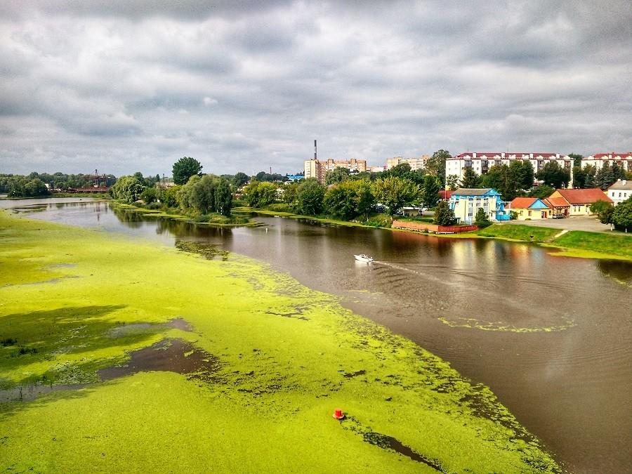 В Пинске река покрылась зеленым газоном