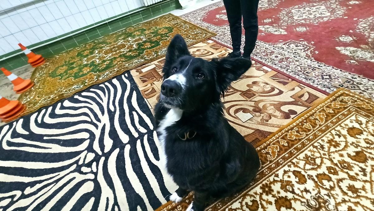 Лапка помощи. Собака лечит в Пинске особенных детей и фобии у взрослых